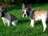 Puppys1
