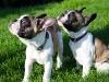 Puppys2